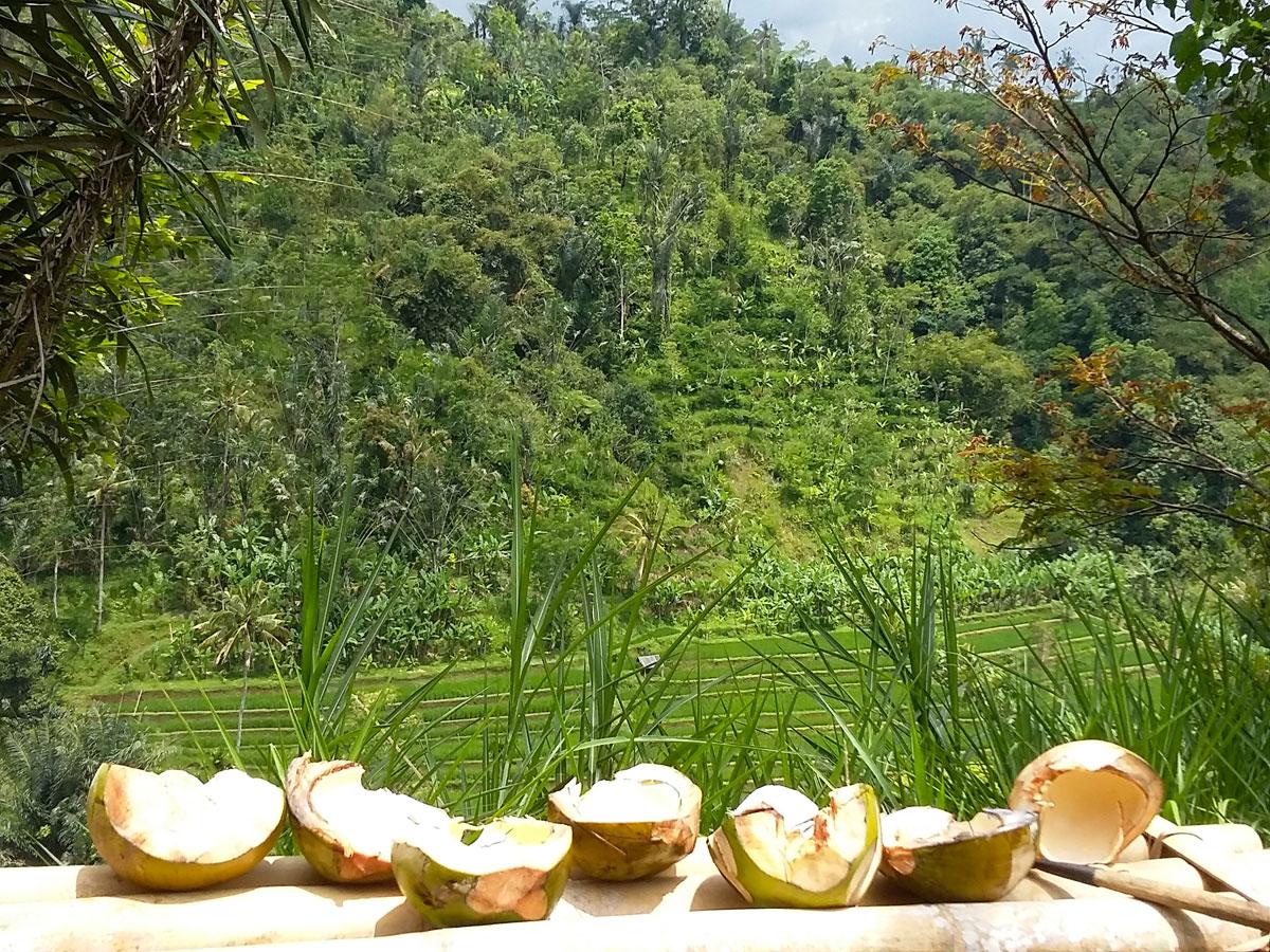 coconut-bar-1